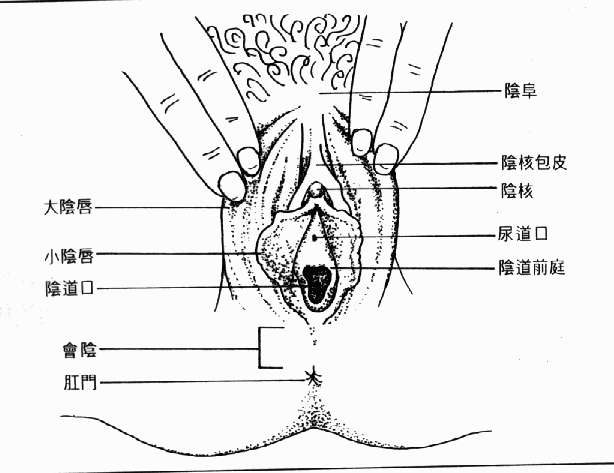女性身体结构